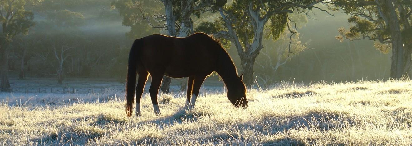 banner-horse-eating