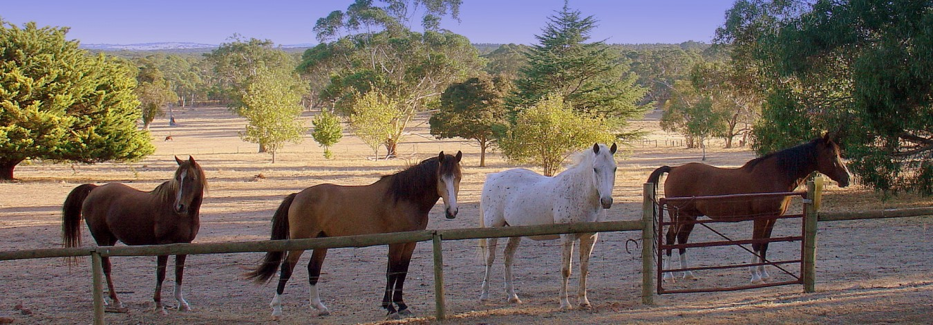 banner-brown-white-horses